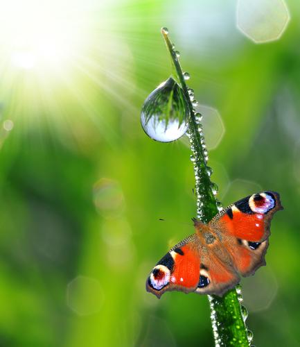 Rain drop and butterflyshutterstock_108653669